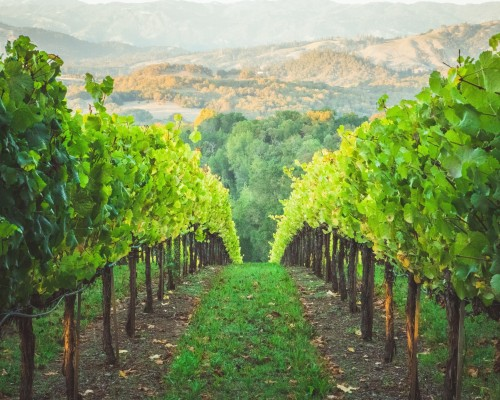 In the Vineyard with Jesus