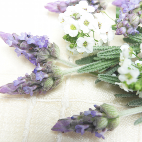 The Fragrant Nard of Your Life